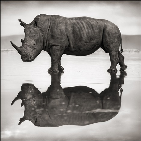 rhino on lake, nakuru by nick brandt