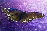 fragile beauty by david drebin