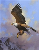 untitled - bald eagle by adrian rigby