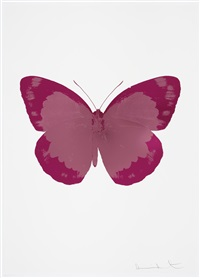 the soul ii - loganberry pink - fuchsia pink - blind impression by damien hirst