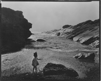 lynn, point lobos by wynn bullock