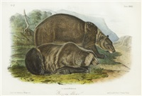 grizzly bear by john james audubon