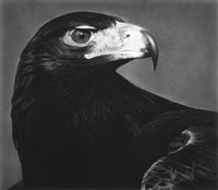 untitled (falcon) by robert longo