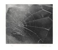 spider web by vija celmins