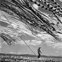 japan. kyoto. silk drying. 1951 by werner bischof