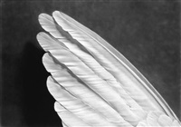 untitled (angel's wings) by robert longo