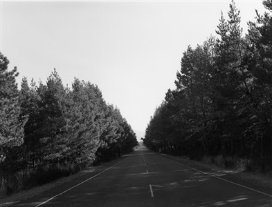 robert adams a road through shore pine by robert adams