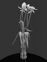 flowers, new york city by albert watson