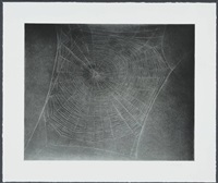 untitled (web 4) by vija celmins