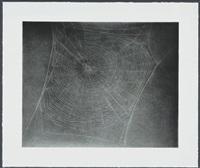 untitled (web 4) by vija celmins