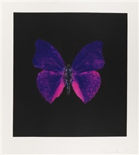 the souls on jacob's ladder take their flight (purple) by damien hirst
