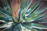 great-and-small-agave-and-vine-at-fossil-creek by dyana hesson