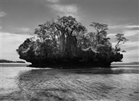 baobab trees on a mushroom island in the bay of moramba, madagascar, 2010 by sebastião salgado