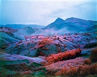 untitled by richard mosse