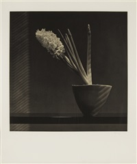 hyacinth by robert mapplethorpe