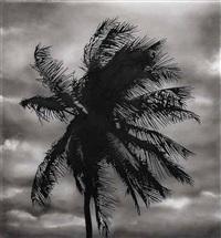 study of palm 6/5/14 by robert longo