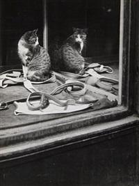 untitled, city cat by brassaï
