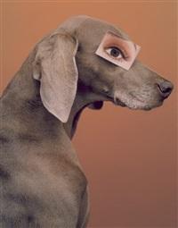 eyewear by william wegman