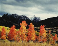 orange aspens, owl creek pass, colorado by christopher burkett