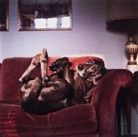 on mrs. wegman's couch by william wegman