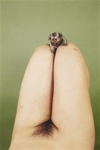 marmoset, lsd by ryan mcginley