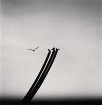 four birds, st nazaire, france, 2000 by michael kenna