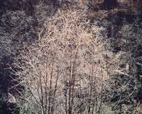 silver oak filigree, tennessee by christopher burkett