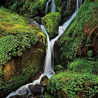 small waterfall, oregon by christopher burkett