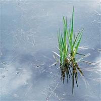 spring grass and rainpool, oregon by christopher burkett