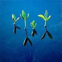spring waterplants, newfoundland by christopher burkett