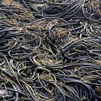 storm tossed kelp, california by christopher burkett