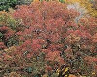 stormy red oak, virginia by christopher burkett