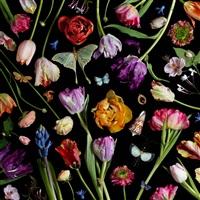 botanical vii (tulips) by paulette tavormina