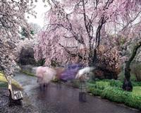hanami #18, shinjuku gyoen, april 3rd by matthew pillsbury