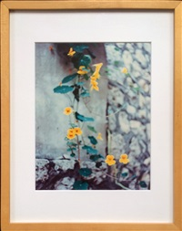 untitled (flowers) by jack pierson