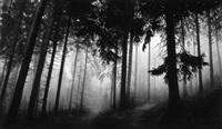 untitled (fairmount forest) by robert longo