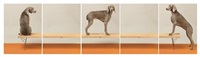 on up and over by william wegman