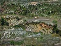 rice terraces #4, western yunnan province, china by edward burtynsky