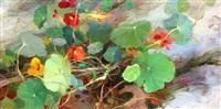 nasturtiums by carol arnold