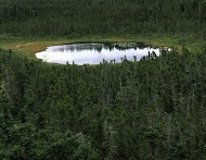 spruce forest and pond, newfoundland by christopher burkett