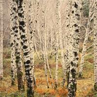 winter alder glade, west virginia by christopher burkett