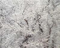 snow and cottonwood, utah by christopher burkett