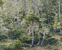 rivendell woods, alaska by christopher burkett