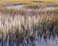 marsh grasses evening light, south carolina by christopher burkett