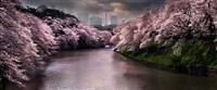 pink spring by david drebin