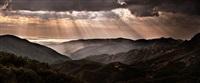 california dreams by david drebin