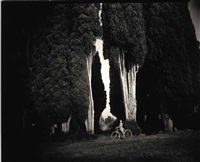 sempervirens stricta by sally mann