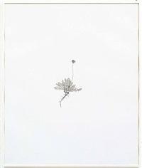 common dandelion by michael landy